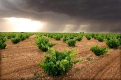 VIÑA tormenta_0039