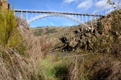 puente pino 009